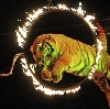 Цирки в Карачеве